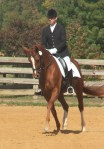 Leeandra warming up for the October 2009 Hanoverian Mare Performance Test