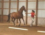 Katie at the trot